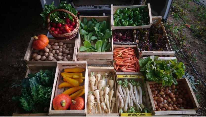 atelierpotager-legumes
